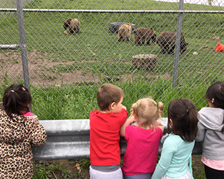 Children looking at the bears playing in the grassy field